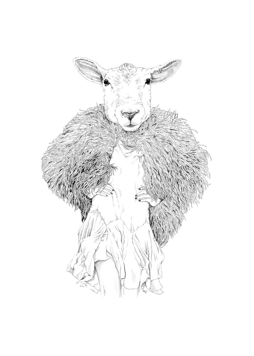 sheepster 50x70